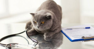 The-Importance-of-Wellness-Exams-for-your-Pet