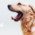 Dental-Care-for-Pets-315-(1)