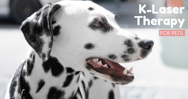 The-Benefits-of-K-Laser-Therapy-for-Pets