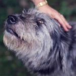 Why-your-pet-should-go-to-the-vet