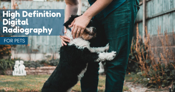 High-Definition-Digital-Radiography-Services-for-Pets