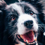Why-Dental-Care-is-Important-for-your-pets