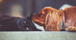 How-Blood-Work-Can-Benefit-Your-Pets-Health