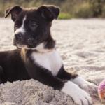 5-Top-Summer-Pet-Care-Tips
