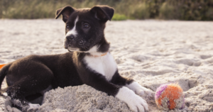 5-Top-Summer-Pet-Care-Tips
