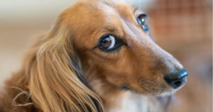 How-to-Manage-and-Treat-Arthritis-in-Pets.
