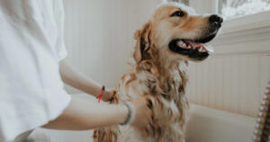 Why Flea Treatment and Management is Important for Your Pet.