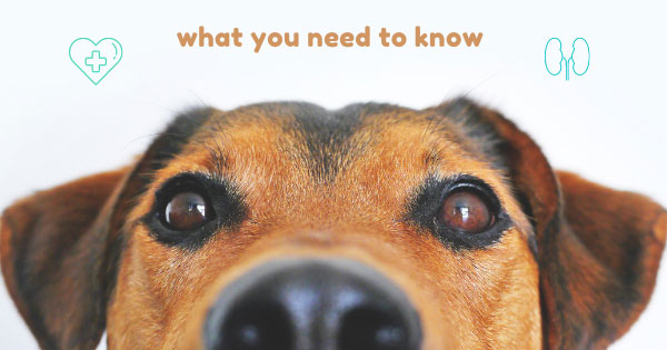 What You Need to Know About Animal Kidney Disease.