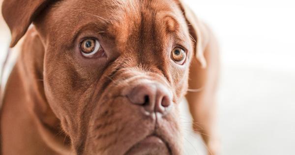 Anxious pet dog.